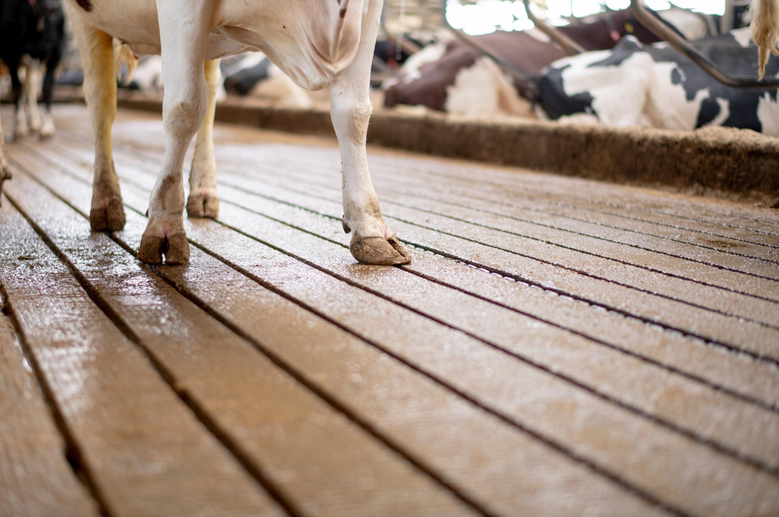 <p>Een goede beloopbaarheid en schone koeien, gegarandeerd!</p>